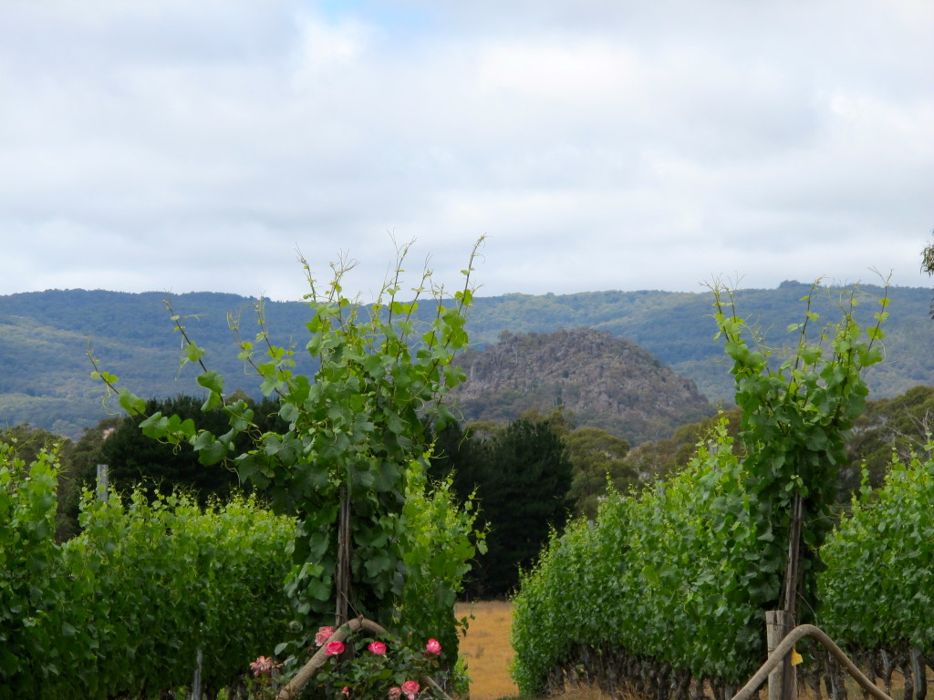 The Macedon Ranges in the Background