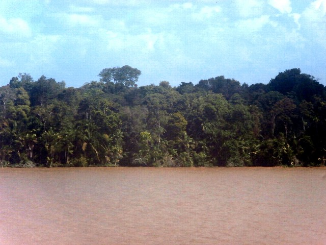 1. Banks of the Amazon River