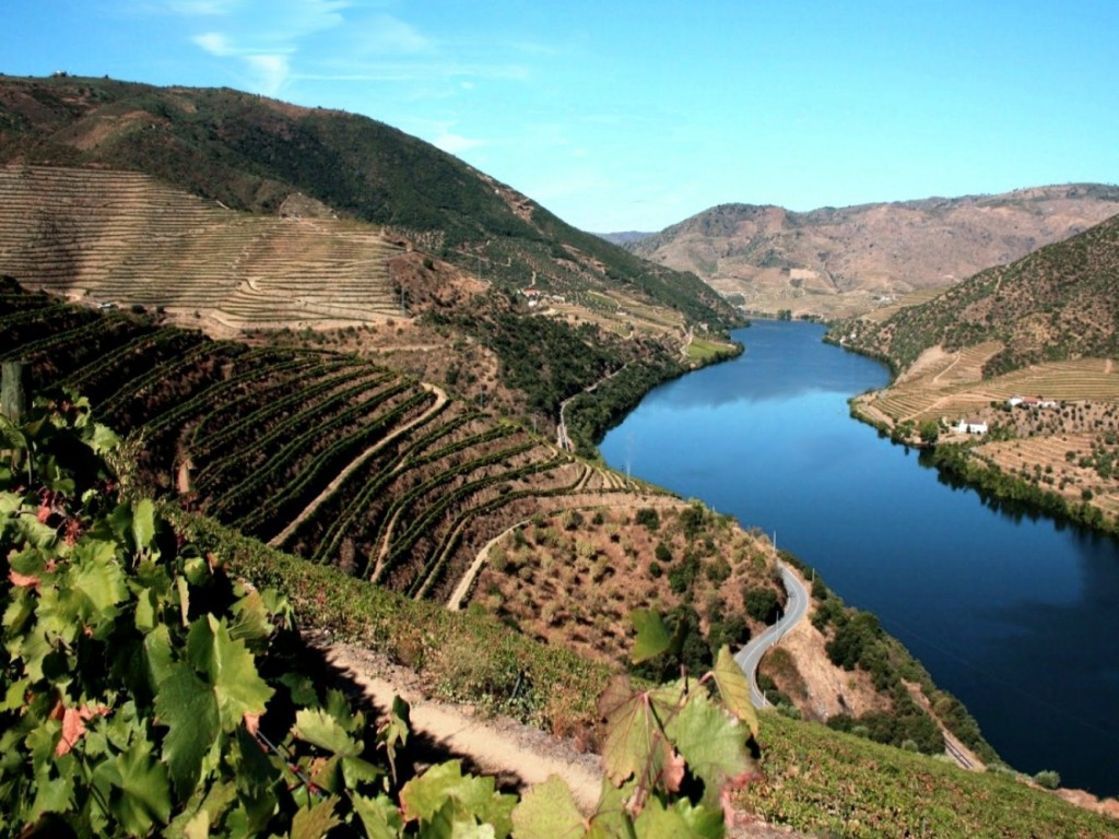 Douro and vineyards